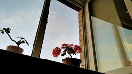 Окно и подоконник с цветами