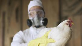 Человек в респираторе и защитной одежде держит в руках курицу