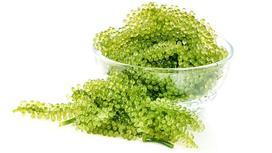водоросли в тарелке