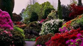 Яркие цветы и кустарники в саду
