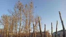 Деревья спилили