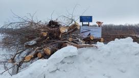 Рубят деревья в Уральске