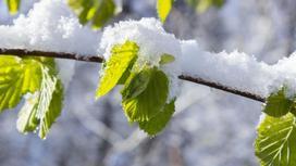 ветка в снегу