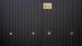 Четыре хаски смотрят из отверстий в заборе