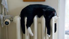 Кот лежит на батареи