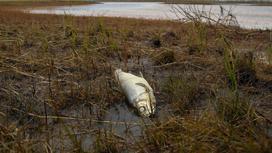 Мертвая рыба лежит на берегу