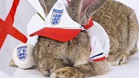 Кролик в кепке Англии