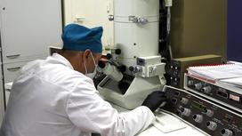 Сотрудник лаборатории изучает вирус