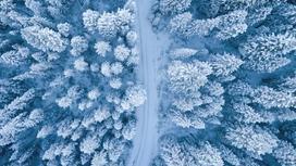 Заснеженные леса