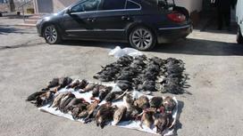 Тушки птиц лежат на земле