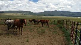 Лошади пасутся за изгородью