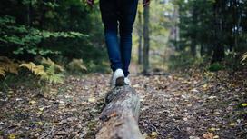Человек идет по толстой ветке дерева