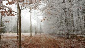 Снег выпал в лесу