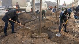Высадка деревьев у магазина в Алматы
