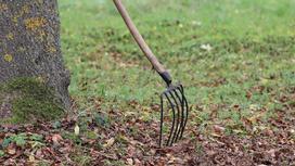 Инструмент стоит возле дерева