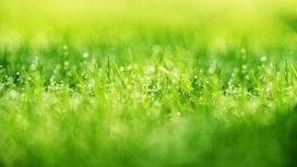 Зеленая трава с каплями росы