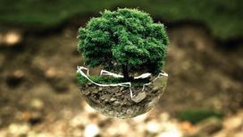 Дерево в скорлупе