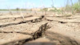 Трещины образовались в почве из-за недостатка влаги