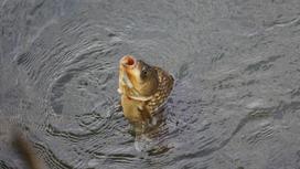 Рыба вынырнула из воды