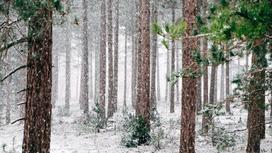 снег идет в лесу