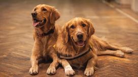 Самые добрые собаки в мире