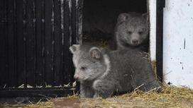 Медвежата в алматинском зоопарке