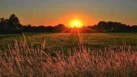 Солнце в поле