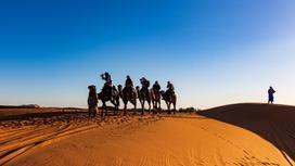 Люди на верблюдах в пустыни