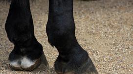 Копыта лошади