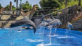 Дельфины выпрыгнули из воды