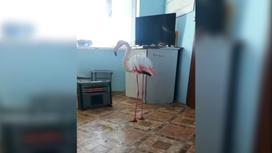 Фламинго стоит в помещении