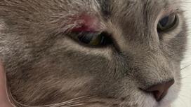 Пострадавший кот