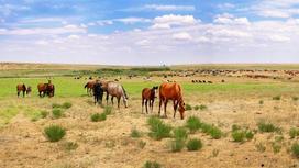 Лошади пасутся в степи