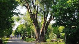 Парк Южный