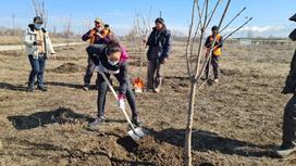 Женщина садит дерево