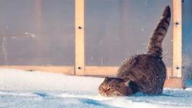 Погода в Казахстане: Начавшееся потепление не остановится