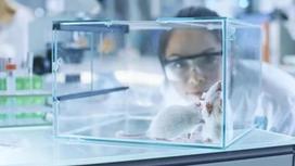 Ғалымдар рак клеткаларының таралуына қарсы тиімді дәрі жасап шығарды