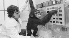 Ученые сообщили о создании гибрида обезьяны и человека