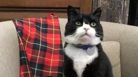 Сотрудникам британского МИД запретили подкармливать местного кота из-за отказа ловить мышей