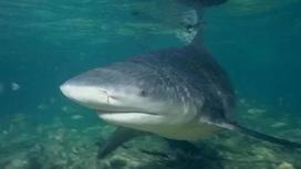 Тупорылая акула перепрыгнула через ограду в бассейн для детей (видео)