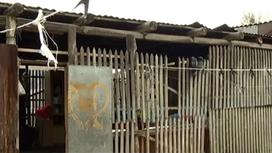 Алматы облысында жалғызбасты ана бес баласымен мал қорада тұрып жатыр (фото)