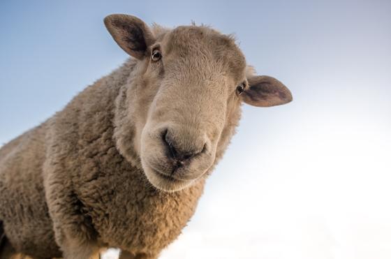 Экспорт живого скота запретили в Казахстане