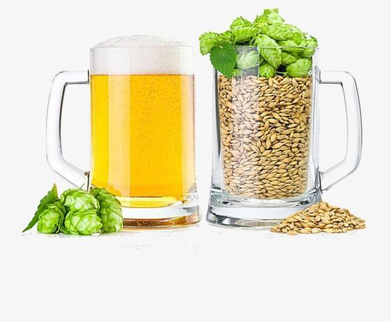Бокал пива и ингредиенты для его приготовления
