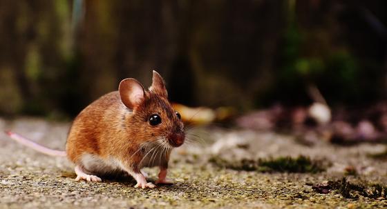 Мышь умывалась в одном водоеме с павлодарскими школьниками