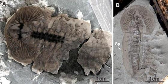 В Китае найдены тысячи неизвестных науке окаменелостей