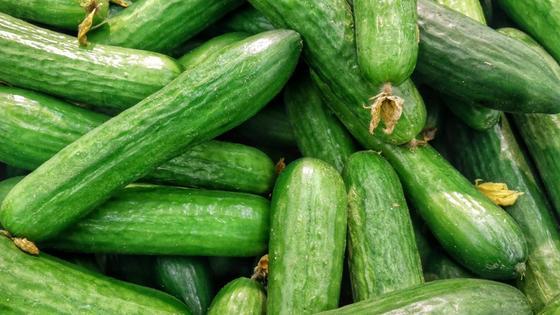 Длинные зеленые огурцы с гладкой кожицей