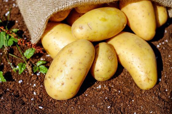 Картофель на земле