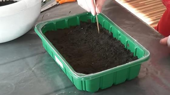 В зеленый пластиковый контейнер засыпали грунт для рассады и рыхлят деревянной палочкой