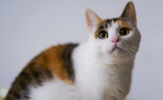 Мужчина обвинил кота в беременности своей жены