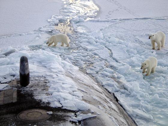 Белые медведи и подводная лодка